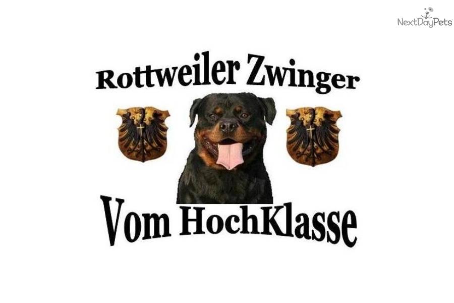 Best Dog Food For Rottweiler Adult Dogs