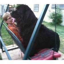 View full profile for Dry Creek Newfoundlands