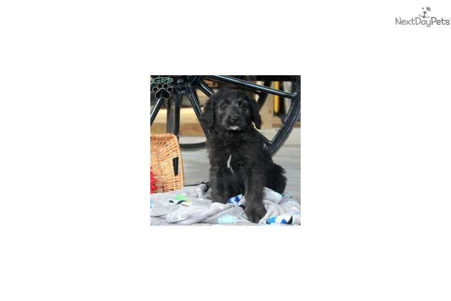 Mixedother Puppy For Sale Near Lancaster Pennsylvania