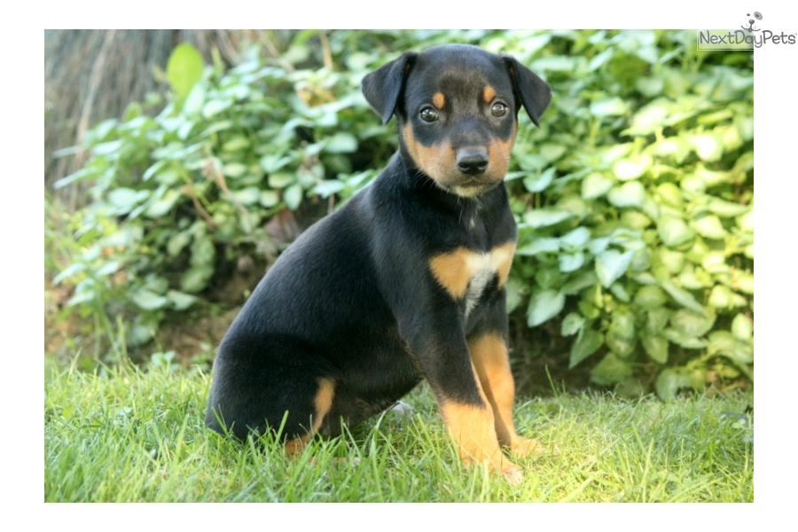 Meet Female A Cute Mixed Other Puppy For Sale For 400