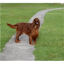 View full profile for Southern Redheads Farm & Kennel