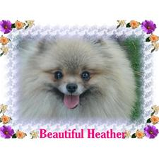 View full profile for barbaras precious poms