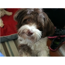 View full profile for Blair Havanese