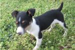 Picture of ACA Reg.~ Max Male RT Pup