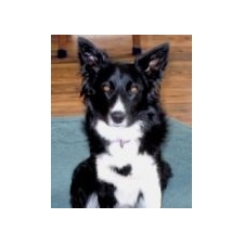 View full profile for Wall 2 Wall Border Collies