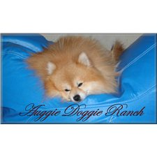 View full profile for Auggie Doggie Ranch