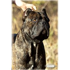 View full profile for Worldwide Cane Corsos