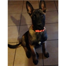 View full profile for Von Ayce Malinois Kennel