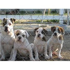 View full profile for Valley Bulldogs