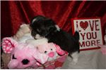 Picture of Little Valentino the Perfect Valentine Gift