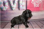 Picture of Alexus Gorgeous Black Female Miki