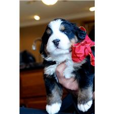 View full profile for Impressario Bernese