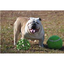View full profile for Ozark Mountain Bulldogs