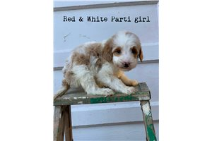 Picture of Red and white pa