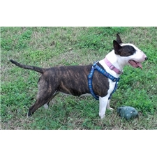 View full profile for Esperanza's Urmysonshine Bullie Haven