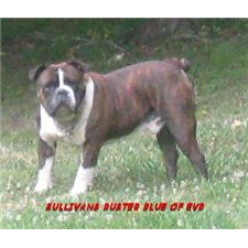 View full profile for elk valley bulldogges