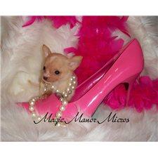 View full profile for Magic Manor Micros