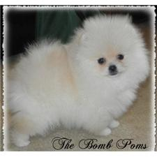 View full profile for The Bomb Poms
