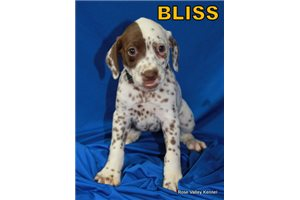 AKC Dals | Puppy at 8 weeks of age for sale