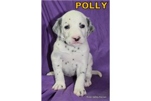 Picture of AKC Polly