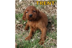 Picture of AKC Trent