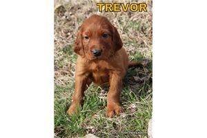 Picture of AKC Trevor