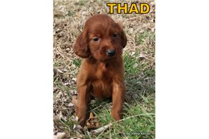 Picture of AKC Thad