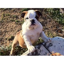 View full profile for Aarons Bulldogs