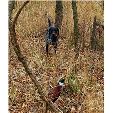 View full profile for Birddoggin, Llc
