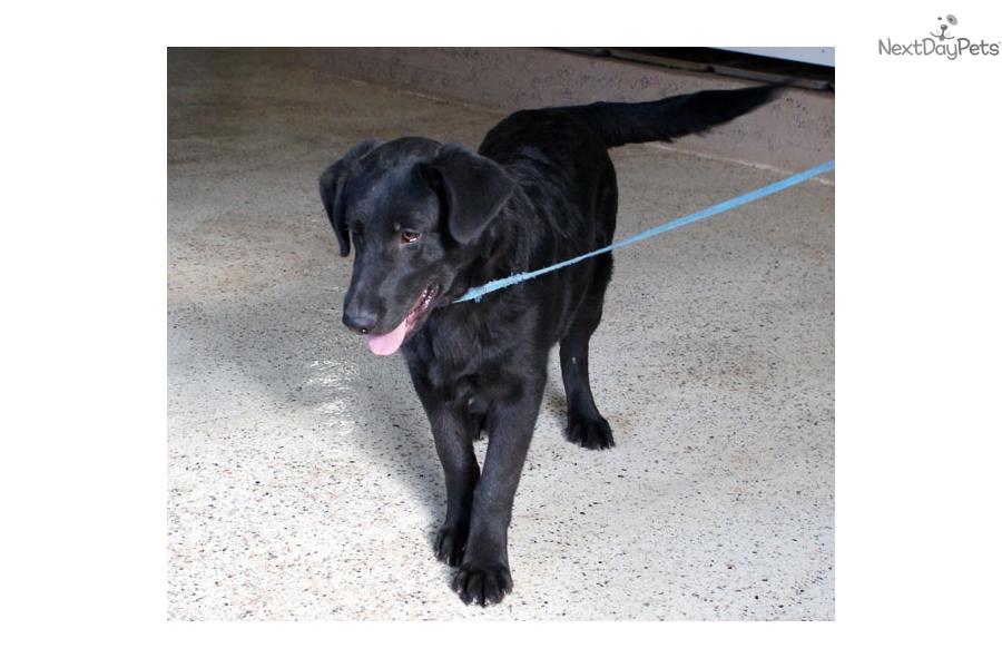 Garwood German Shepherd Puppy For Sale Near Williamsport