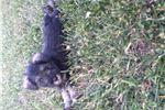 Picture of puppy mini