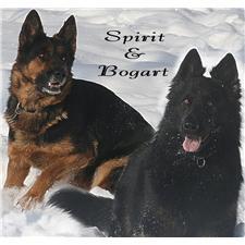 View full profile for Von Stott Haus German Shepherds