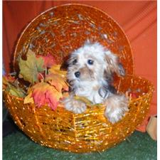 View full profile for My Family Puppies.Com