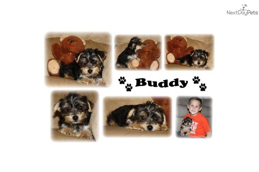 Buddy Boy Dog Food Price