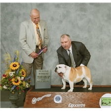 View full profile for Watts English Bulldogs
