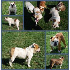 View full profile for North Georgia Bulldogs