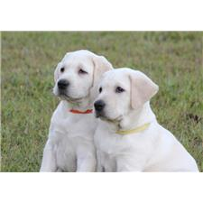 View full profile for Premier Quality Pups