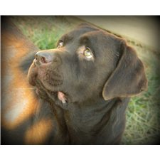 View full profile for Presidential Labradors