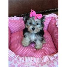 View full profile for Barton Puppy Boutique