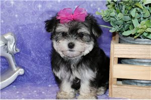 Picture of Sweet Nellie!