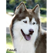 View full profile for Arctic Pomskies