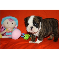 View full profile for Sadie's Place Bulldogs