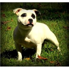 View full profile for Colonial Staffy's