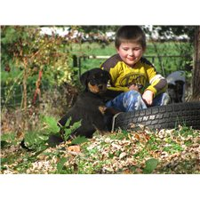 View full profile for COUNTRY CLUB ROTTWEILERS & BULLMASTIFFS