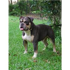 View full profile for Olde South Bulldogges