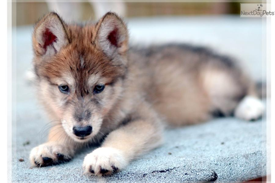 Female Wolf Dog Names