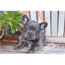 View full profile for Exotic Bulldogs
