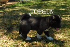 Picture of Topgun
