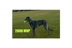 Picture of MVP Deerhound
