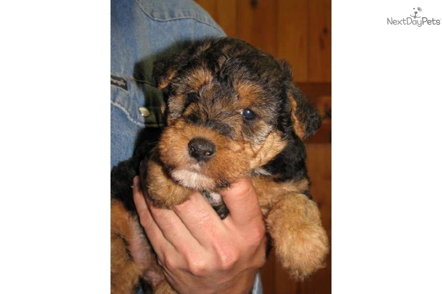 Female Dog Names For Welsh Terriers